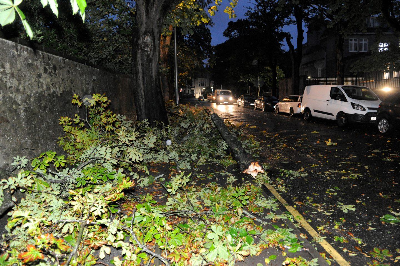 Fallen tree on Albyn Grove.