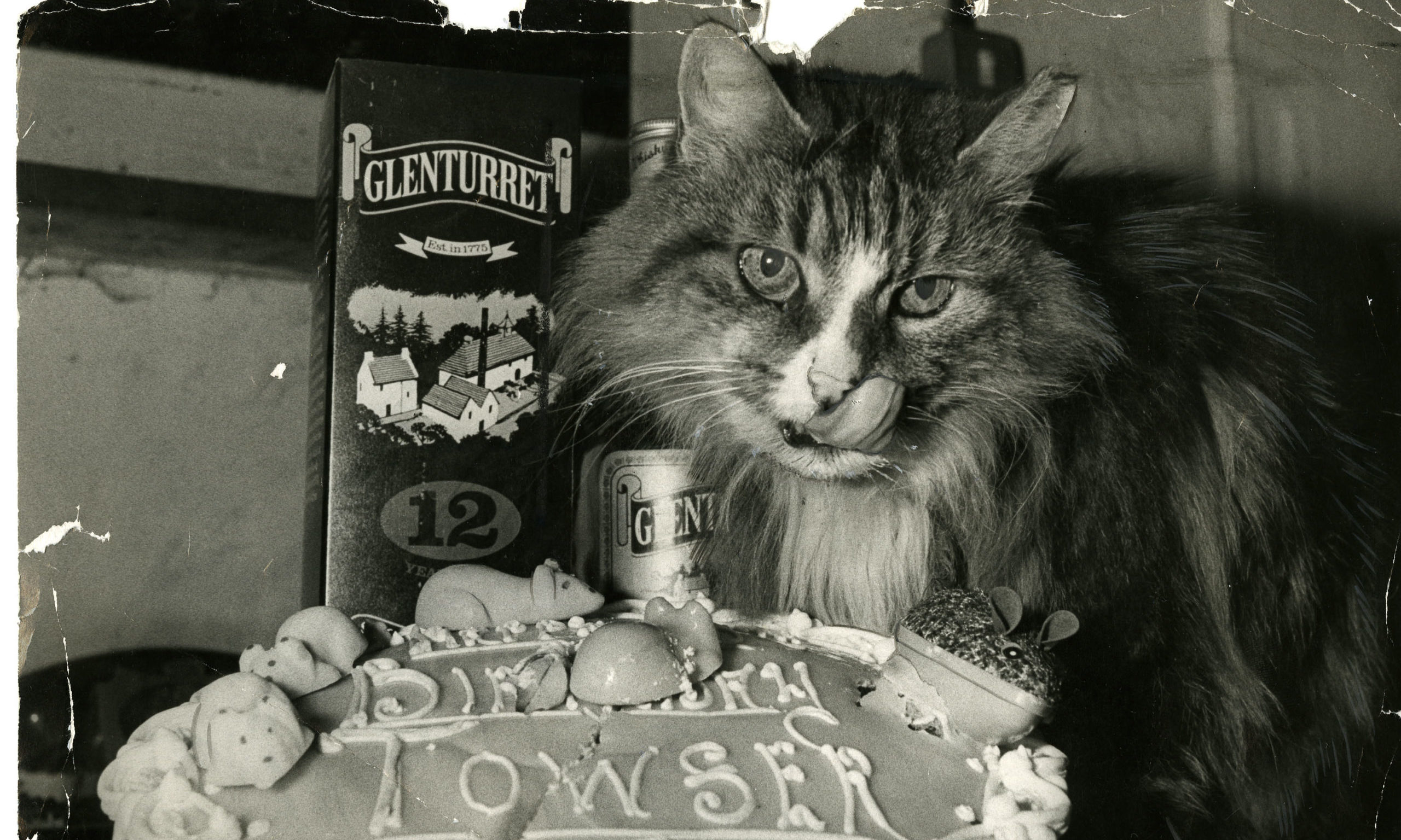 Towser, the famous Glenturret Distillery cat.