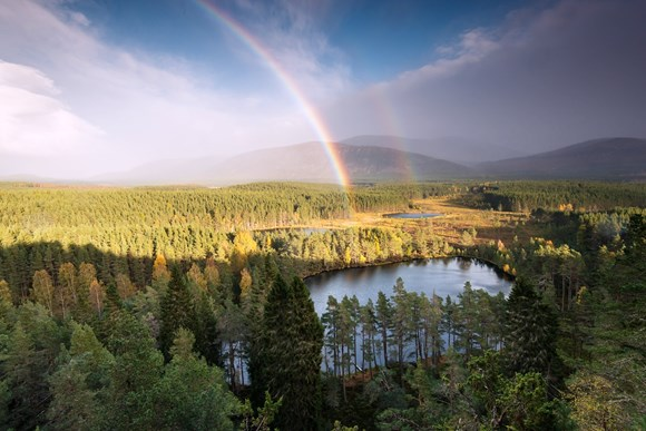 There are many reasons to marvel at the Cairngorms.