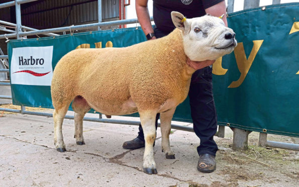 Clinterty Charlie topped the sale at 1,400gn.