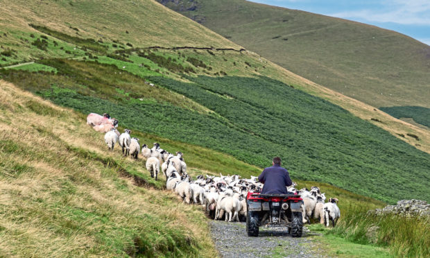 Upland Sheep Support Scheme payments will begin in May 2021.