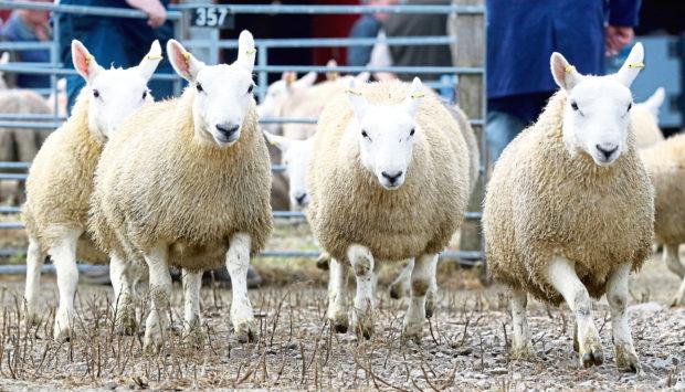 Stuart Ashworth argued the introduction of export tariffs need not keep farmers awake at night.