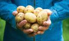 SoilEssentials will lead the potato project.