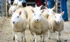 Finishers paying high store lamb prices are relying on a Brexit deal being agreed.