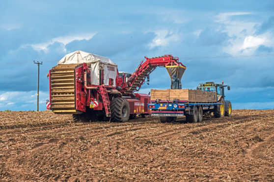 The fund aims to help tattie growers improve their water and soil sustainability.