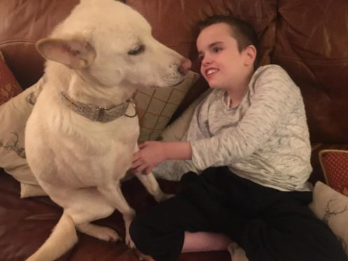 Highland rescue dog Miracle has been shortlisted in the finals of the Amplifon Awards for Brave Britons in the Hero Pet category after rising to fame on Britain's Got Talent.