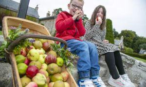 Cameron (5) and Jessica (7) Hawkins at Pitmedden Garden's  drive-through apple harvest. Courtesy Rory Raitt