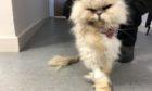 Cat found in wheelie bin in Balmedie.