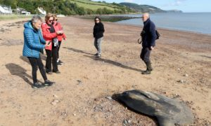 A sun fish washed up on Rosemarkie Beach