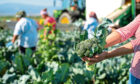More than 100 horticulture growers have requested a ballot on the continuation of a statutory levy for the sector.