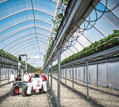A robot checks up on the progress of crops in a polytunnel.