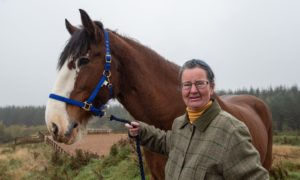 Clydesdale horse Lauder with Frances Davies. Picture by Jason Hedges.
