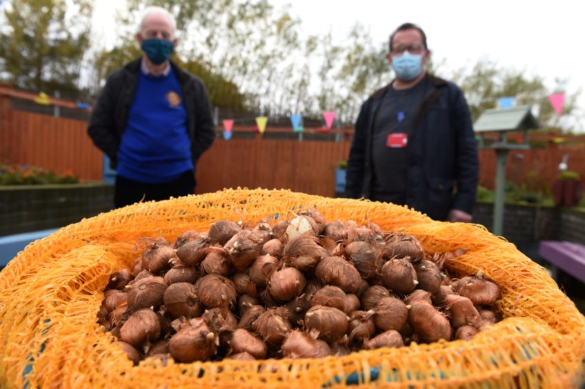 Councillor Neil Baillie is asking people to buy some of his thousands of crocus bulbs, donated by the Rotary, in order to help pay for a new summerhouse at the St James Sandy Lamb (Rotary) and Neil Baillie.