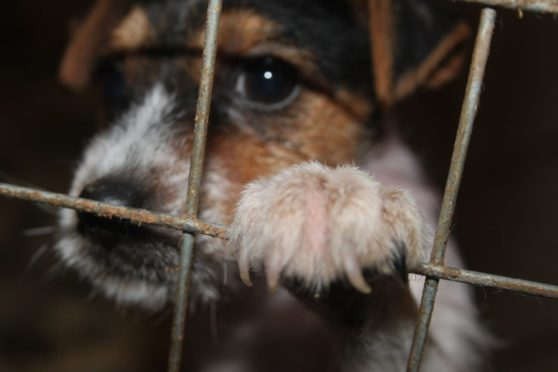 Advice Direct Scotland are urging dog lovers to be on their guard following a sure in puppy farming across the country.