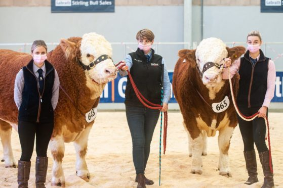 Lauren, Fiona and Ellie Stronach with the two 14,000gn Islavale bulls.