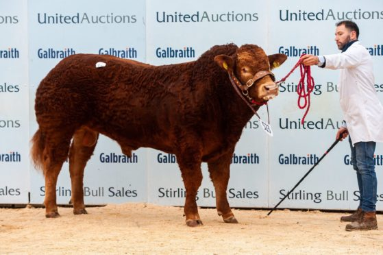 Homebyres Potter topped the Limousin sale at 9,500gn.