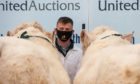Everyone attending the Stirling Bull Sales was required to wear a face covering.