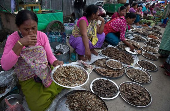 Manipuri women sell dry fish at a market in Imphal, northeastern Manipur state, India, Monday, Aug.8, 2016 Photo by Anupam Nath/AP/Shutterstock (5828010c)