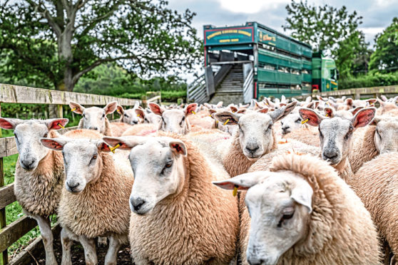 The farming industry is concerned that any future trade deals after the Brexit transition period could undermine the UK's high health and welfare standards.