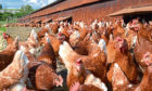 New bird flu restrictions are in place