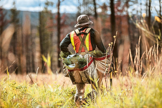 Environmental concerns have impacted the value of land for planting trees.