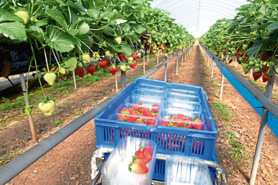 Scottish farmers have increased the amount of land they use to grow fruit and vegetables.