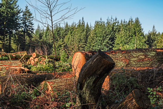 Scotland accounted for 82% of the total newly planted forestry area in the UK.