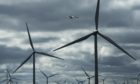 A study is to be carried out on the risk of seabird collision with offshore wind farm turbines. PA Wire