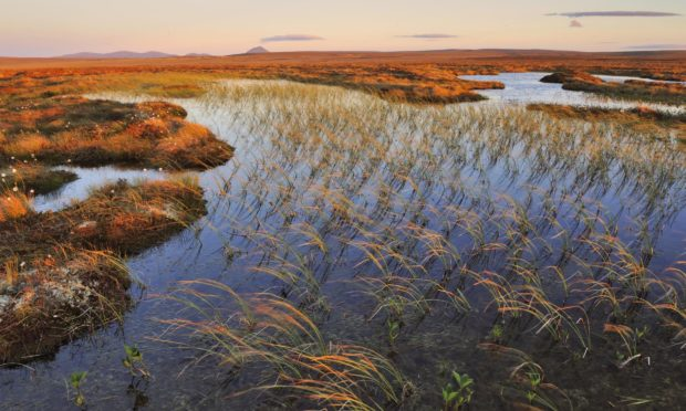 Blanket bog in Flow Country. Credit Lorne Gill for NatureScot Date; Unknown