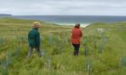 A tree planting scheme being run throughout the length of the Western Isles has been saved.