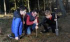 Angus Gardyne, 12, Steve Gardyne and Alasdair Lawson, 13, planting trees as part of their project to build a £140,000 skate park at Bell Wood, Aboyne