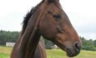 Dettori the horse is recovering well from his operation.