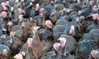 More than 10,000 turkeys will be culled.