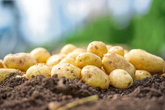 Walkers will create a new fertiliser using potato peelings.
