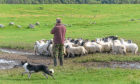 Tenant farmers on secure 1991 Act tenancies could soon be able to sell their tenancy to new entrants.