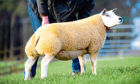 Heatheryhall Erin sold for 2,200gns.