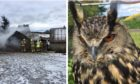 Firefighters tackle the blaze at Coachford after Ms Lavin rescued her pets, including Eurasian eagle-owl Ugg, from the smoke and flames.