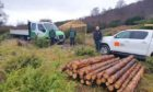 Work to protect Highland Wildcats moves to next stage.
