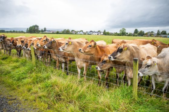 IN-COO-LATE: Get abdy in line ahin a fence and gie em a quick jab on the wye past and that'll be the hale o the village