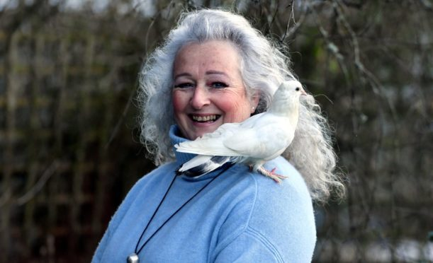 Mel Shand pictured with her pet dove Gloria. Picture by Chris Sumner
