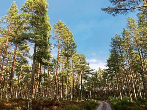 Red squirrels, sea eagles, hen harriers, capercaillie, Scottish crossbills and many rare insects thrive in productive forests.