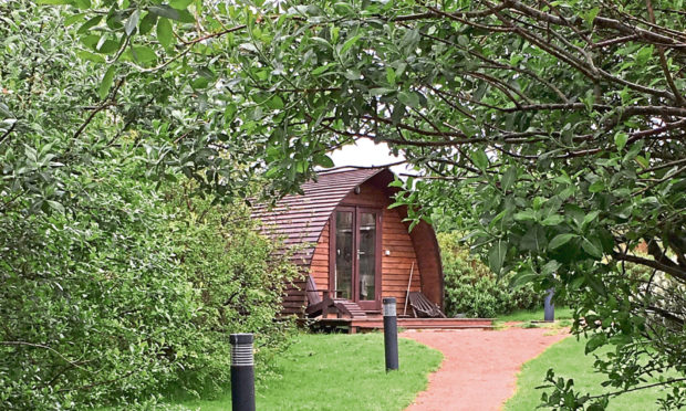 Andrew Hall used trees to create a scenic area for his glamping pods.