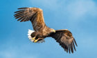 The White-tailed Eagle Action Plan launched in 2015.