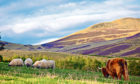 Crofters fear Brexit may mean more, not less bureaucracy, and a supply shortage of vital inputs.