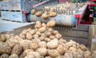 The UK's potato growers and traders will soon be voting for or against continuing to pay a statutory levy for the sector.