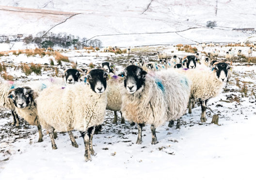 The Scottish Government has been accused of short-changing the farming sector.