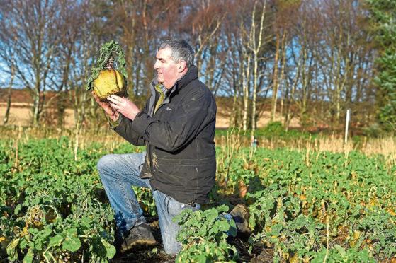 Niall Mustard won the turnip championship.