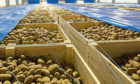 An estimated 22,000 tonnes of British seed potatoes are exported to Europe every year.