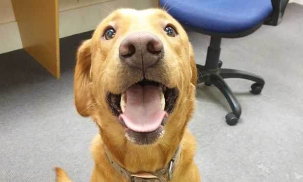 The golden retriever was found and handed into officers at Keith police station.