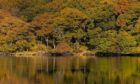 Loch Arienas, Morvern where RSPB Scotland are leading a project to enhance and restore important areas of the rainforest.